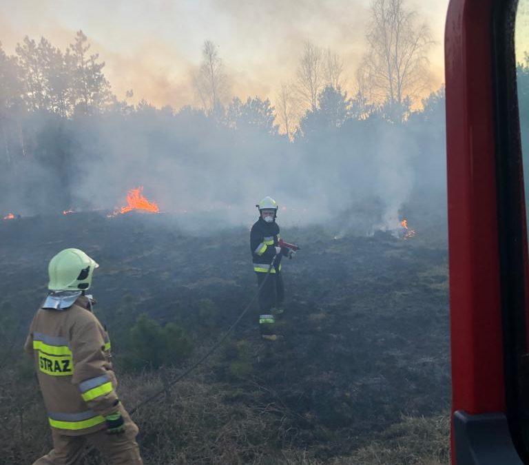 Pożar trawy oraz poszycia leśnego